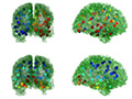 eigenmodes of the brain's network