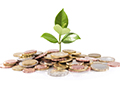 seed money with sprout